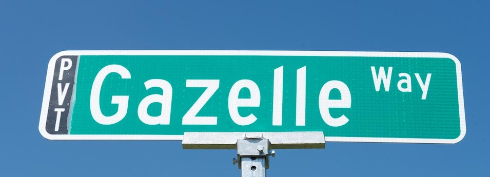 gazellesign